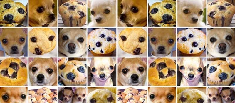 is it dog or a muffin